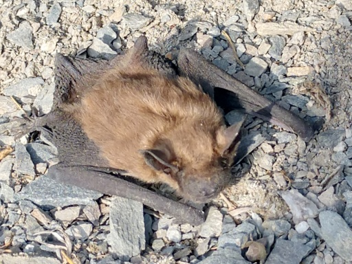 Remove Bats From Property