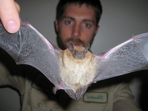 Bat Trapping Methods