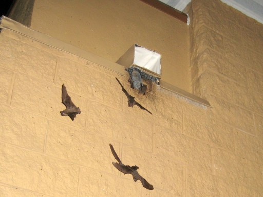 Remove Bats From Chimney