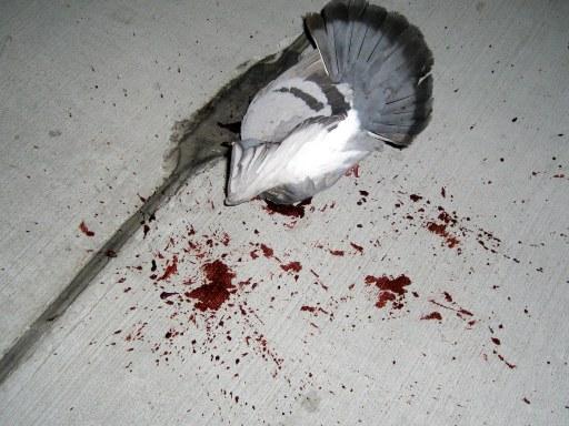 Dead Birds Removal