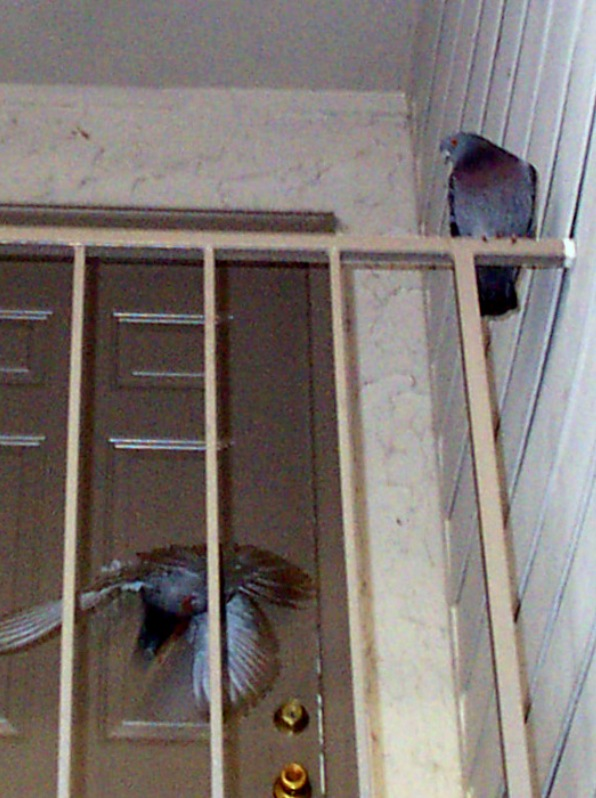 Bird Prevention Methods