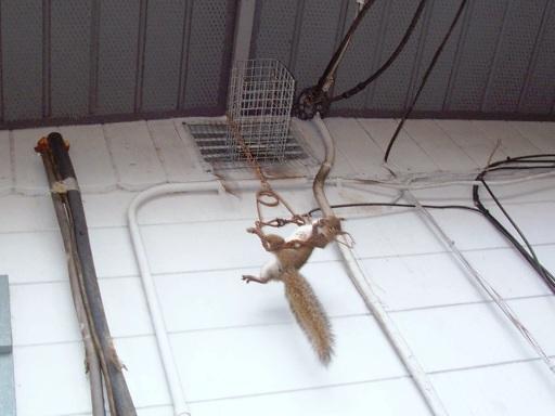 Ways To Kill Squirrel