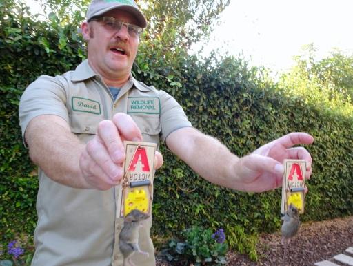 Mice Repellents Effectiveness