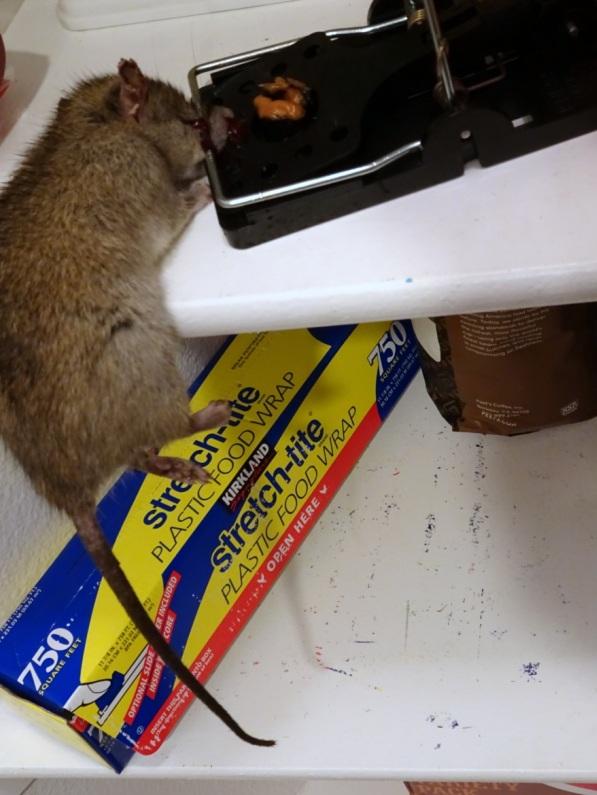 Rat Repellents