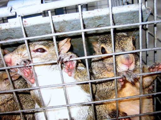 Squirrel Habitat