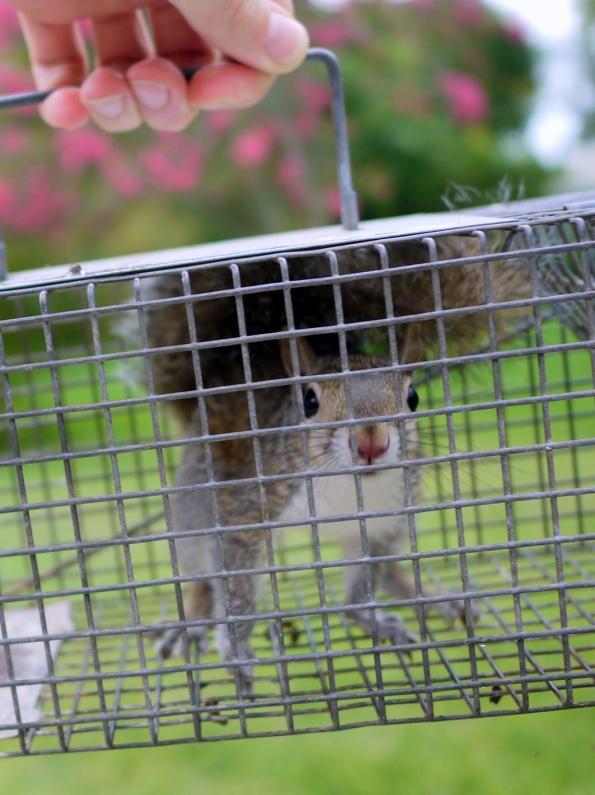 Squirrel As Pet
