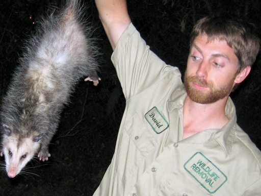 Opossum Repellents Effectiveness