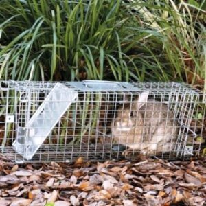 Rabbits Removal Tips
