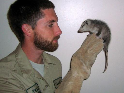 Locate Dead Opossum