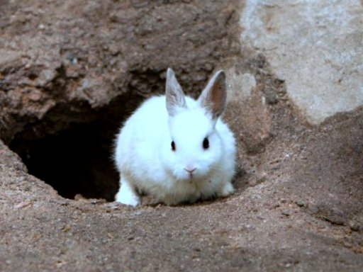rabbit in hole
