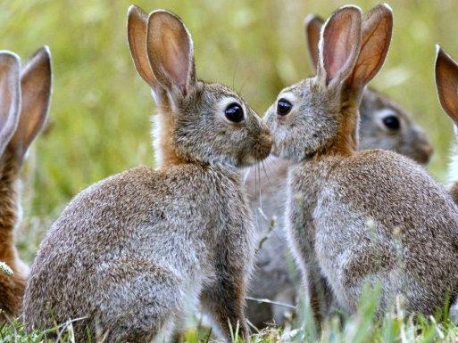 Rabbits Removal
