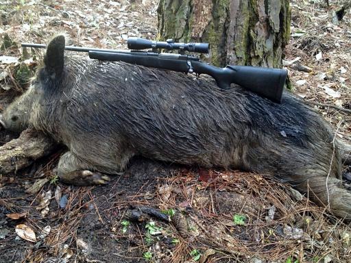 Different ways to kill wild hogs
