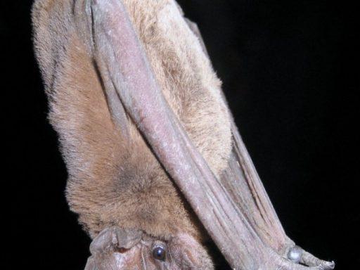 Bat Removal Professionals
