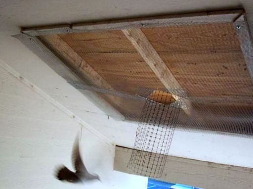 Birds Removal
