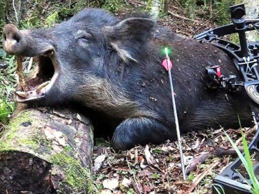 Wild Hogs Killing Ways