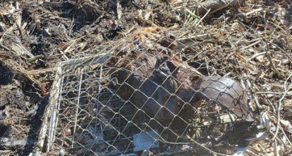 Get Rid Of Beavers