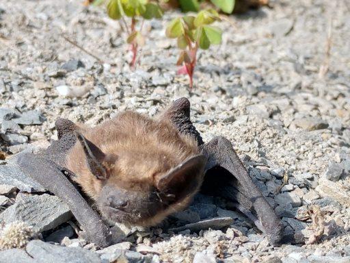 Maternity Season of Bats