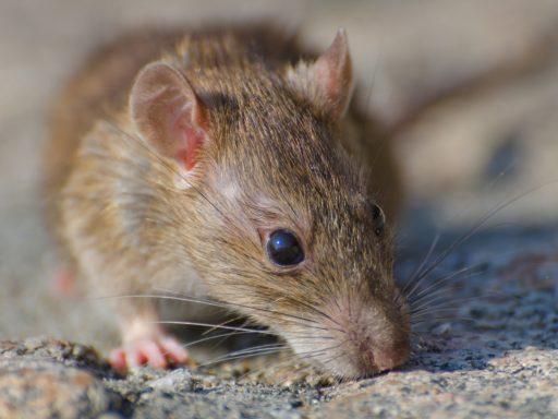 Mouse Habitat