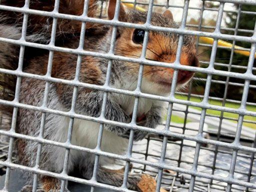 Squirrel Repellents