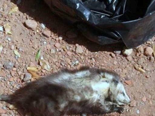 Dead Animals Removal