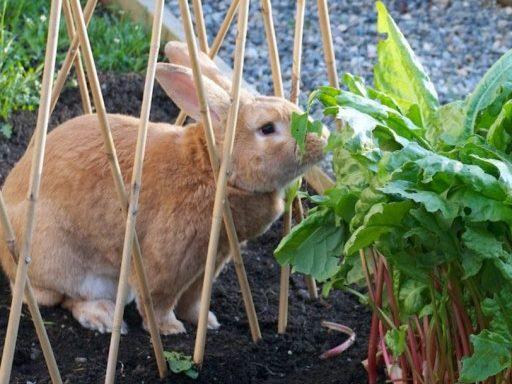 Rabbit Prevention