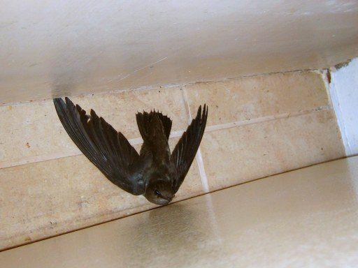 Woodpeckers Damage