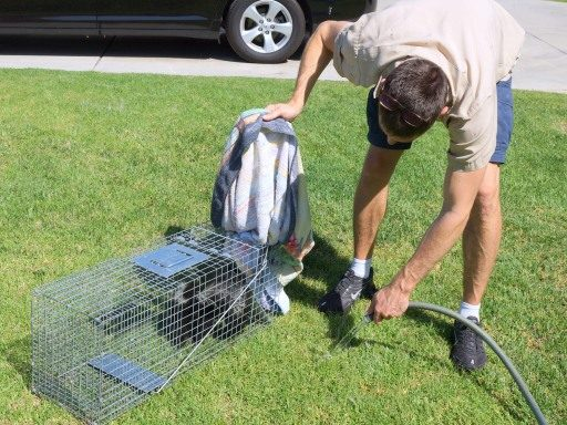 cleaning trap
