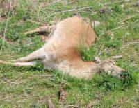 Dead Animal Prevention