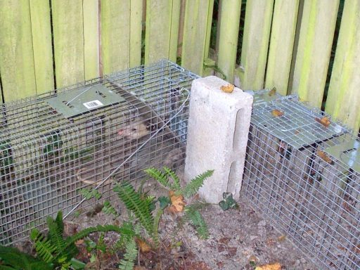 Opossums Prevention
