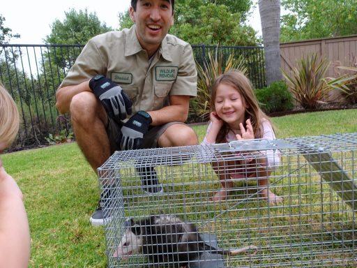 opossums prevention