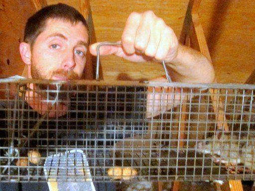 Rat Removal Professionals