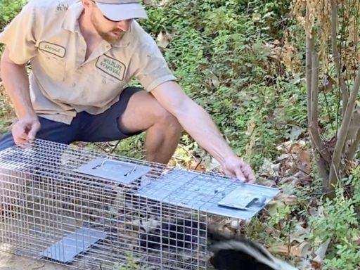 release skunk