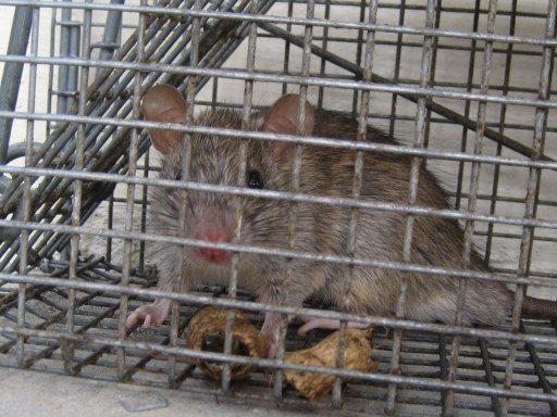 Mice Damage,Humane Mouse Trap