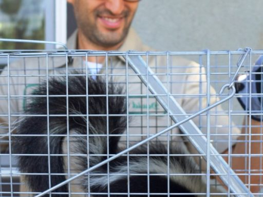 skunk exterminator