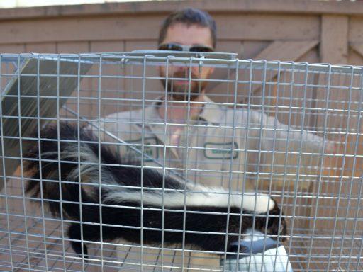 skunk mothball