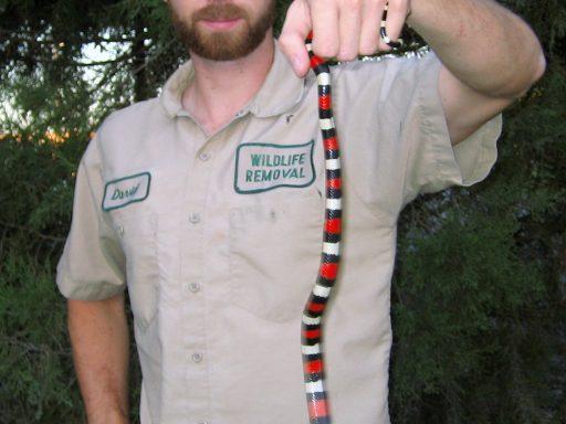 snake removal pro