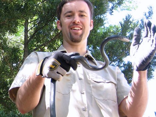 snake removal professional