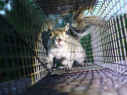squirrel prevention