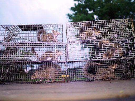 Relocate Squirrel
